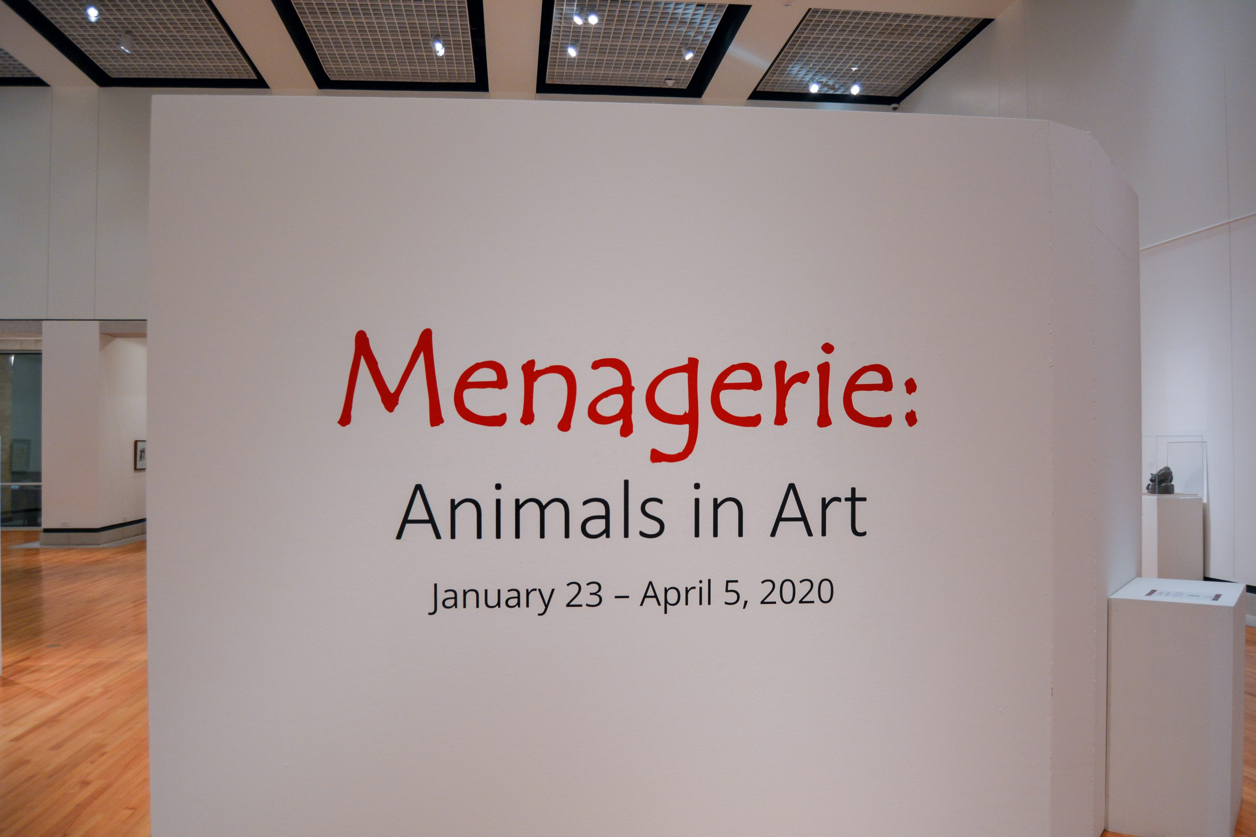 """Title wall in gallery; it reads """"Menagerie: Animals in Art"""" January 23-April 5, 2020"""