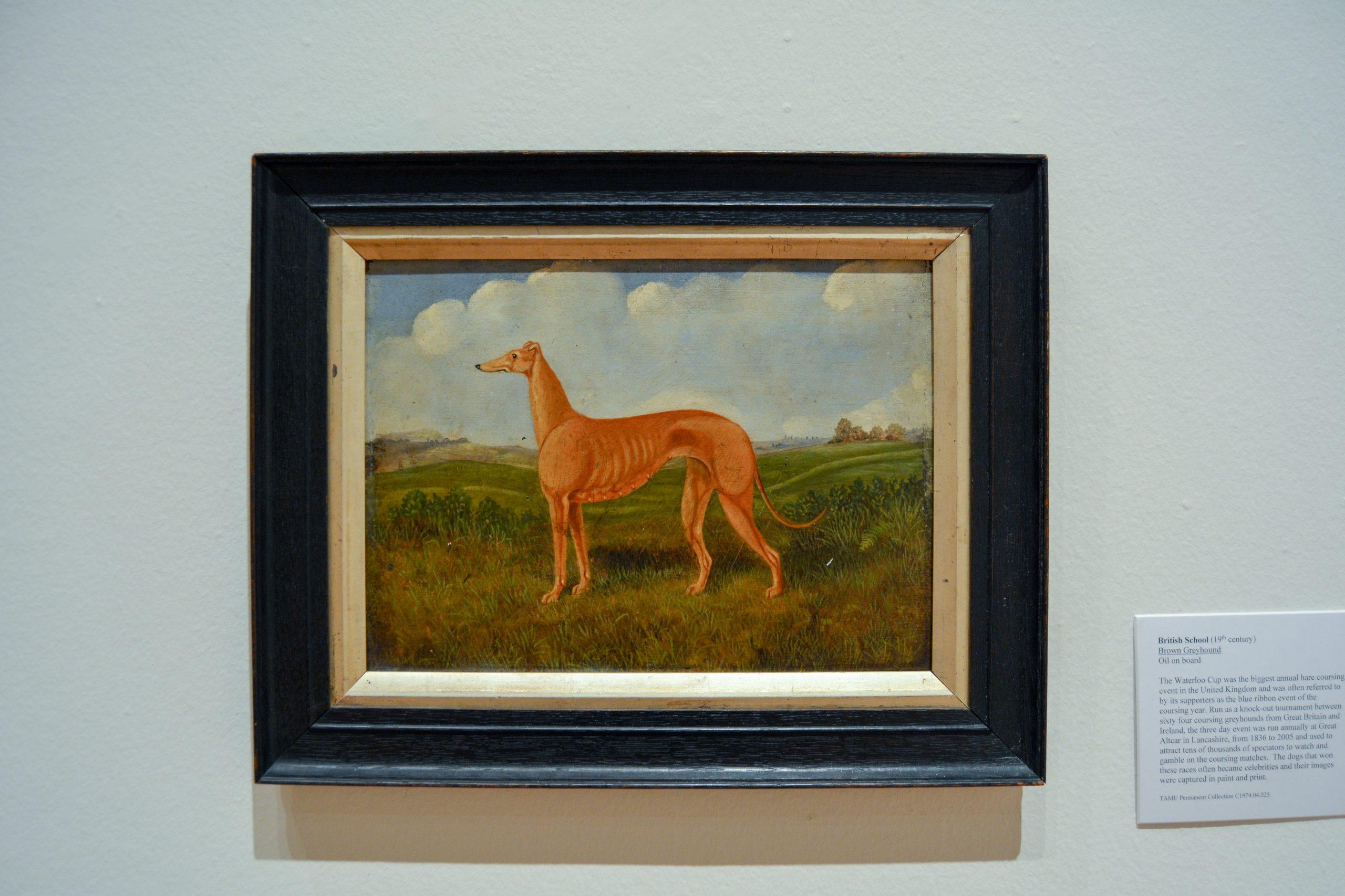 Tan greyhound dog