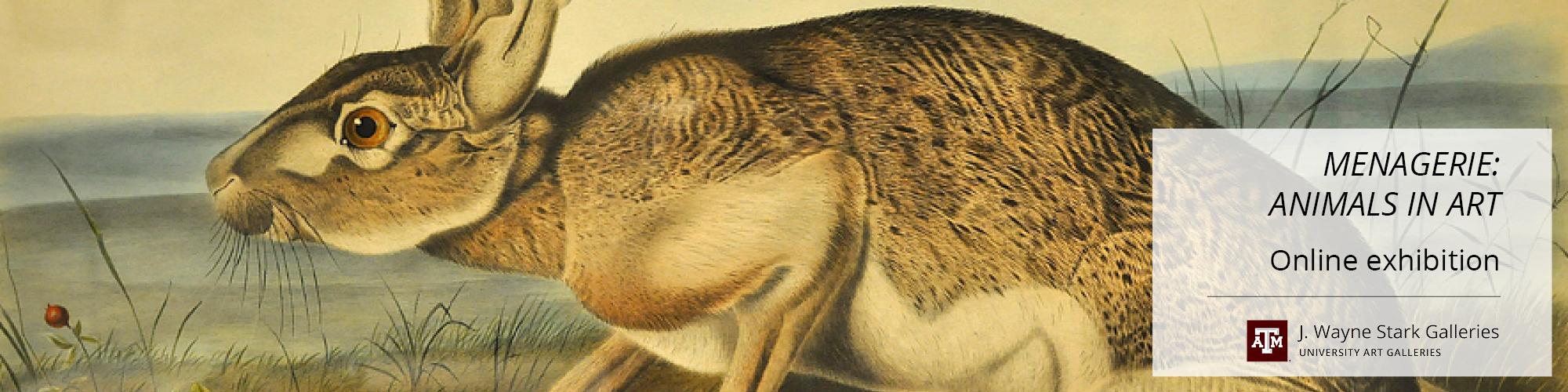 Audobon print of a wild jackrabbit